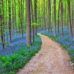 Volunteers are invited to guide visitors through Hallerbos